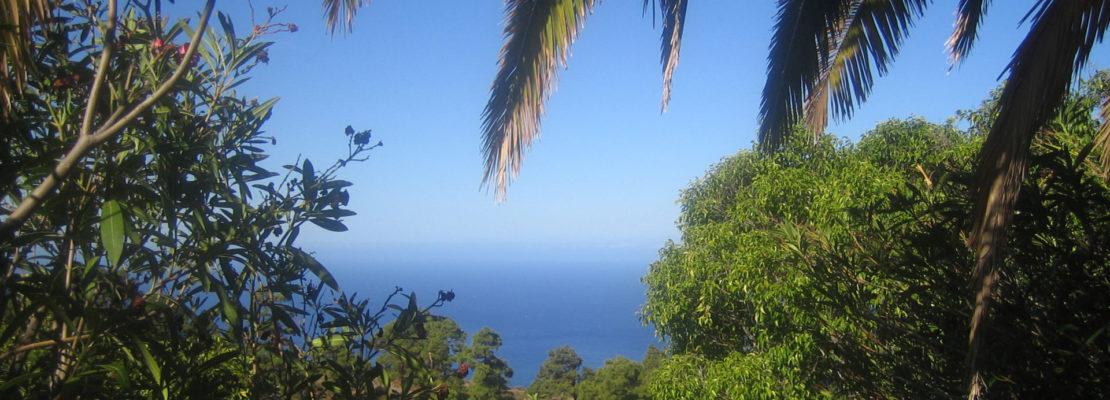 La Palma 2020
